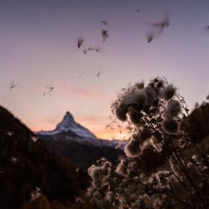 Foto: ©Pascal Gertschen
